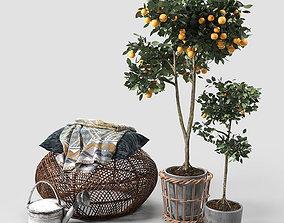 3D model Orange Trees set 03