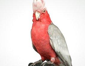 3D model Roze Kaketoe Eolophus Roseicapilla Bird