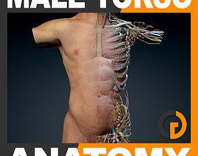 Human Male Trunk Torso Anatomy 3D model