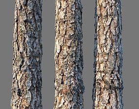bark Pine wood 8k seamless material detailed 3D model