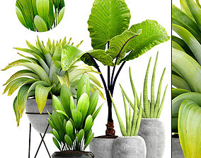 3D Collection of tropical plants