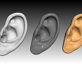 Ear 3D Model Updated VR / AR ready