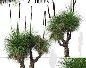3D model Set of Xanthorrhoea arborea or Broad-leafed 4