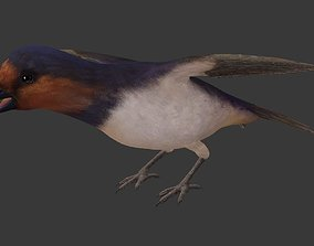 Swallow 3D asset