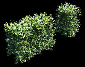 3D Murraya paniculata hegde