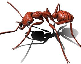 3D asset Ant Fire