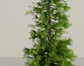 PBR Fir Tree 3D model