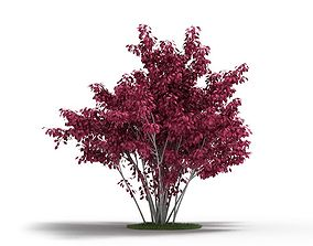 3D model Plant Ornamental Purple Leaf Tree