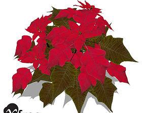 XfrogPlants Poinsettia 3D model