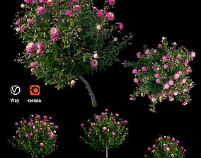 3D model Plant rose set 05