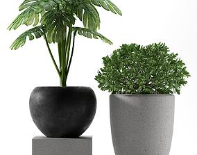 PLANTS 237 3D model