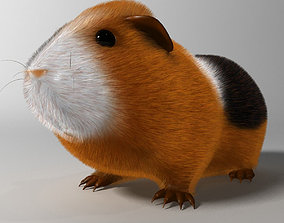 3D asset Guinea pig Cavia porcellus Rigged