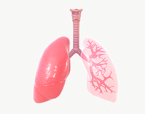 Respiratory System 3D model animated