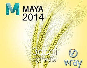 3D model Barley
