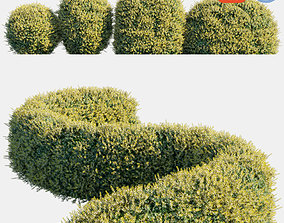 3D model Auto hedge collections 5