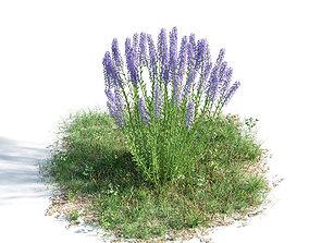 3D Lavandula angustifolia 35 am154