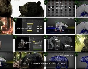3D Grizzly Brown Bear and Black Bear