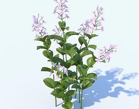Golden Eranthemum plant 3D