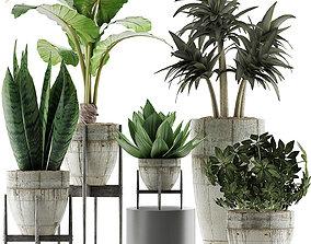 3D Plants Collection 37