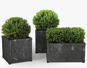 3D model Bushes