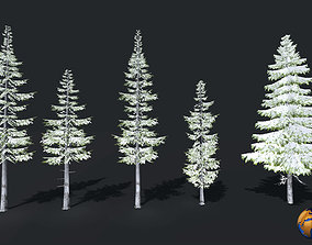 game-ready Winter Trees Spruce Douglas fir Lowpoly 3D