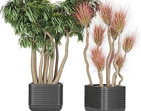 Collection plant vol 9 3D model