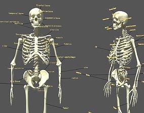 Human Skeleton 3D pose