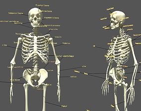 Human Skeleton 3D pose