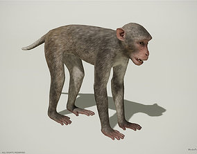 game-ready Rhesus Macaque 3D Monkey - PBR