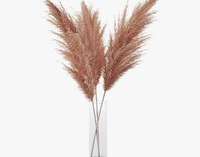 3D model Pampas grass 03