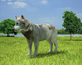 Gray Wolf Canis Lupus 3D model
