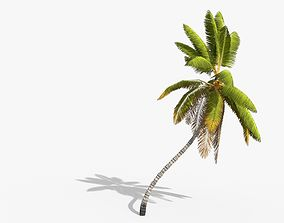 3D asset Coconut Palm Tree 1581