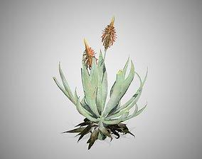 AloeVera Flower 3D model