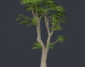 Low Poly Tree 06 3D asset VR / AR ready