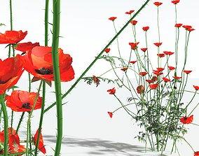 3D EVERYPlant Field Poppy 03 --20 Models--