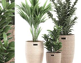 Decorative plants in a basket 568 3D model