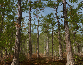 3D asset Pine trees forest