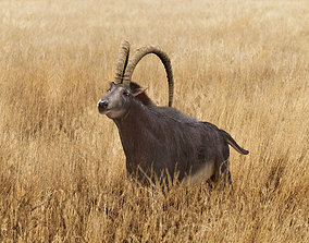 Sable Antelope - Rigged 3D