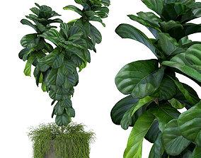 3D Plants collection 359