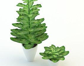 3D model Plants Dieffenbachia