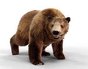 Brown Bear Fur Animated 3D model