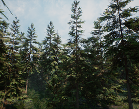 Realistic Spruce Trees 3D asset