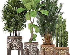 rapis Collection of Exotic plants 3D