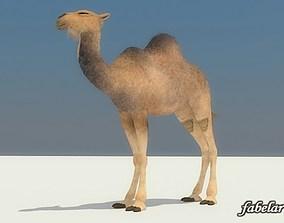 3D Camel