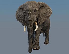 Elephant Animations 3D model animated