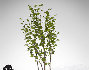 3D model XfrogPlants Hazel Tree