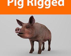 3D asset Pig Rigged Model