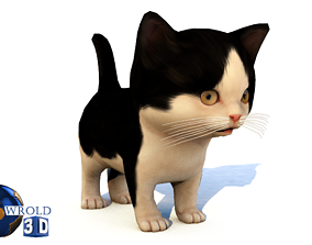 Cute Kitten Cat Rigged Lowpoly 3D Model animated