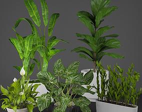 house plant set 3D