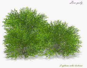 3D asset Bush Willow Salix purpurea Nana